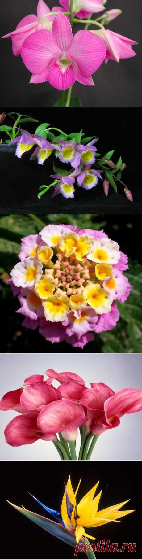 Самые красивые цветы....