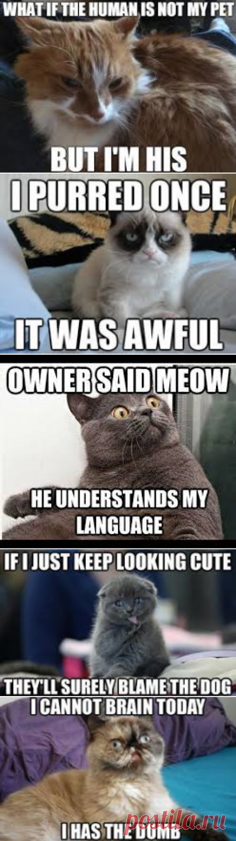 CAT MEMES - Google Search