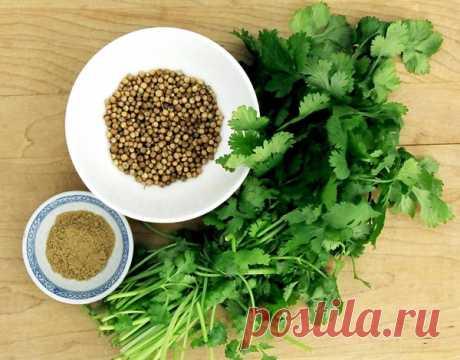 Кориандр (кинза) Кориандр, или кинза – пряное овощное растение, известное многим. Его листья богаты витамином С, содержат витамины группы В, а также каротин и рутин. В свеем виде кинза, для которой характерны сильный аромат и острый вкус, употребляется в качестве закусочной зелени к сырам, салатам и супам.