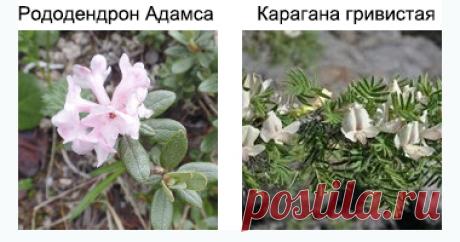 Академия Медицинских Наук Украины: ПАПИЛЛОМЫ, РОДИНКИ И БОРОДАВКИ в любой момент могут стать меланомой - РАКОМ КОЖИ!!! СРОЧНО ЛЕЧИТЕ!