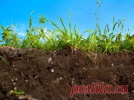 9 эффективных способов вернуть почве плодородие