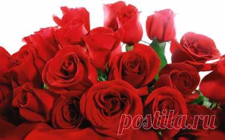 Красные розы – всегда были и будут постоянным символом желания, страсти, радости и красоты! Это уже больше, чем цветок — это идеальный образ любви!