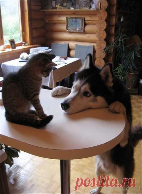 """.""""... и чего это я в тебя такой влюбленный !?"""".."""