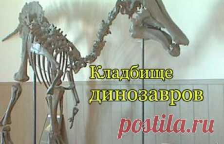 Кладбище динозавров В Амурской области, на окраине Благовещенска находится удивительное место, которое прославилось в научных кругах всего мирового палеонтологического сообщества.