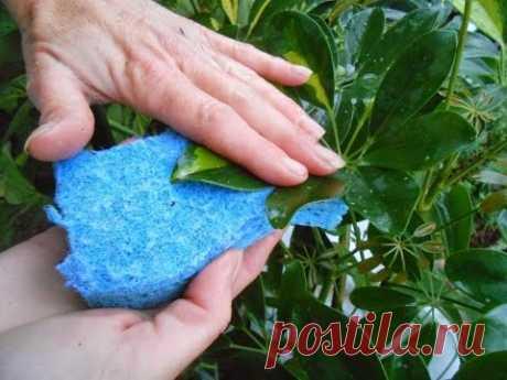 ¿Que frotar las hojas que brillemos? El POLIPAPEL para los COLORES por las manos. Las bases del fitodiseño