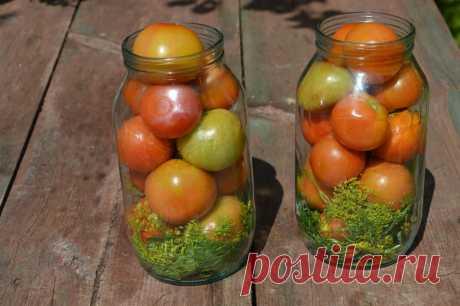 Соленые помидоры с горчицей и без. Есть ли разница. | Пчелы Мед Огород | Яндекс Дзен