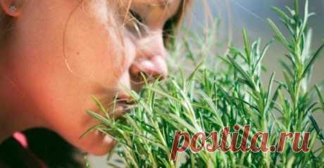 ¡Cамая la hierba potente para la circulación de la sangre cerebral, el corazón, los vasos, las cápsulas suprarrenales, las articulaciones, la piel, el cabello y no sólo! – Godinnik