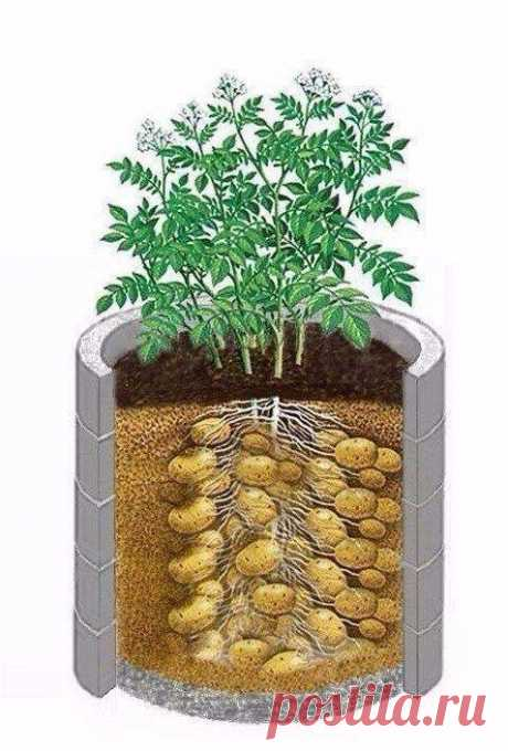 Картофель в бочках: мешок картошки с 1 метра