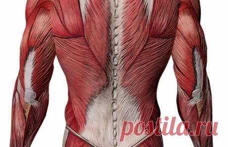 Снятие болей и спазмов с мышц поясницы простым комплексом упражнений. | health and beauty | Яндекс Дзен