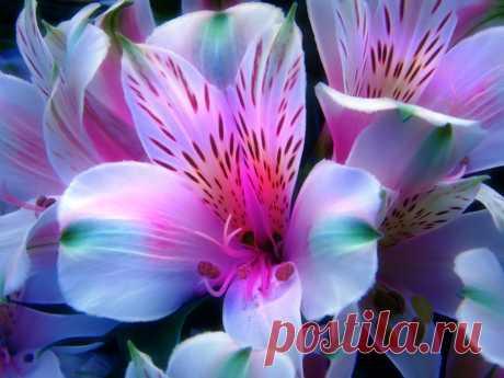 Я люблю ✿ ЦВЕТЫ ✿ | I ♥ Flowers