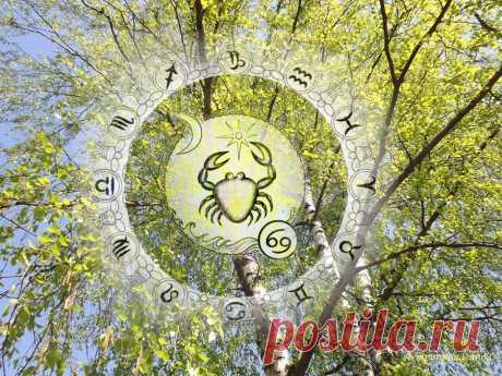 Гороскоп на период с 30 марта по 3 мая 2020 по неделям для Рака | Астропропаганда | Яндекс Дзен ♋✨ Автор: астролог Нина Стрелкова. ✧ Период высоких устремлений. Закладывание основы будущих профессиональных успехов потребует также и многих ограничений, постоянного контроля над собой. В ином случае, при недостатке самодисциплины и достойных целей усилится внешний контроль над вами. В вашем знаке находится, и будет еще долго находиться, Восходящий лунный узел, символизирующий будущее...