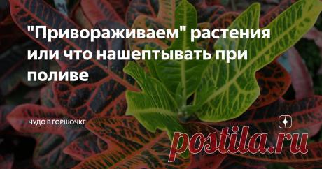 """""""Привораживаем"""" растения или что нашептывать при поливе Магия на службе у цветовода: заговоры-шепотки для комнатных растений."""