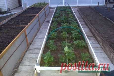 Warm beds: sizes, structure, watering, protection. - A site and a garden - Articles - FORUMHOUSE