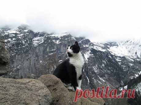 Кошка спасла заблудившегося в горах Швейцарии путешественника: