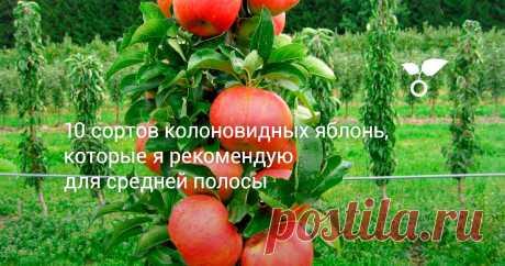 10 сортов колоновидных яблонь, которые я рекомендую для средней полосы В этой статье расскажу о сортах яблонь колоновидного типа, которые, по моему мнению, заслуживают наибольшего внимания садоводов средней полосы.