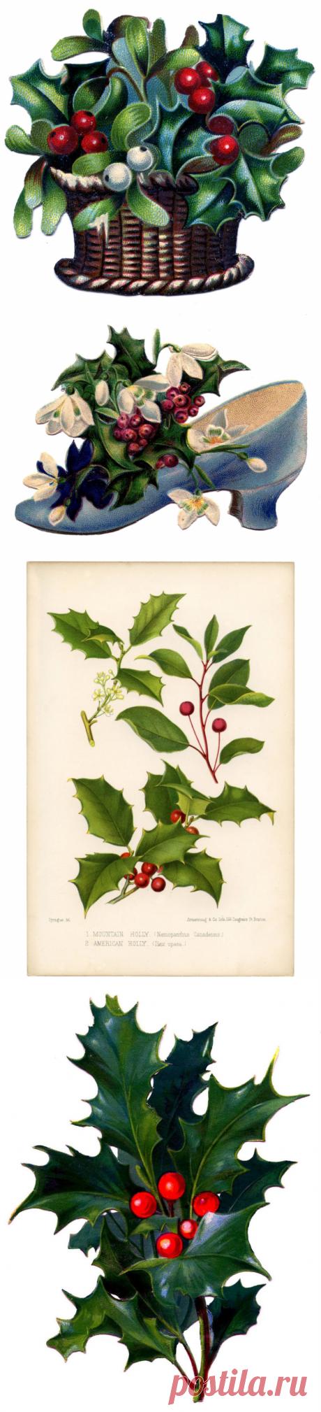14 Рождественских Изображений Холли! - Графика Сказочная