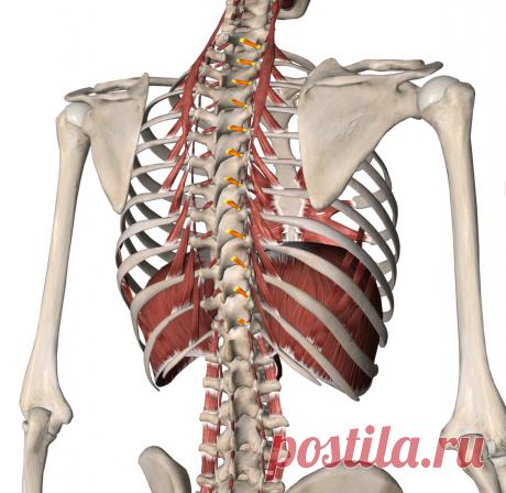 Растяжка для сохранения здоровья позвоночника. Комплекс из 5 упражнений, которые помогут жить без болей в спине. | Чтобы тело не болело | Яндекс Дзен