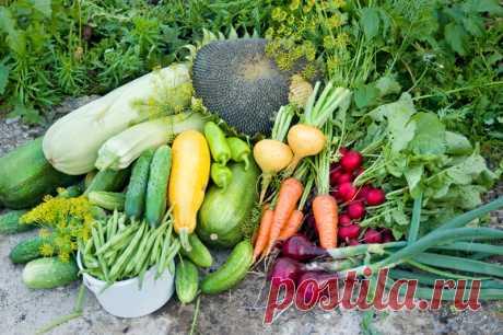 Садоводы рассказывают, как эффективно сформировать грядки и цветочные клумбы, чтобы урожай был максимальным.  Опытные огородники планируют, где они проложат новые грядки, еще до начала посевного сезона. И это правильно, ведь рациональное использование земли на приусадебном участке повышает урожайность садовы…