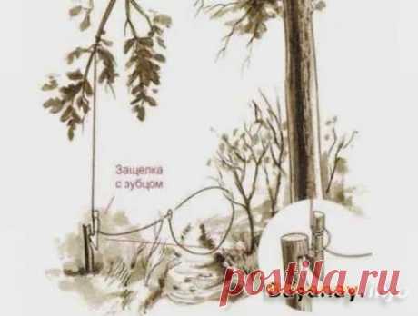 """Como hacer los cepos de los materiales de circunstancias »la Aplicación De Internet de la revista """"БАЙАНАЙ"""""""