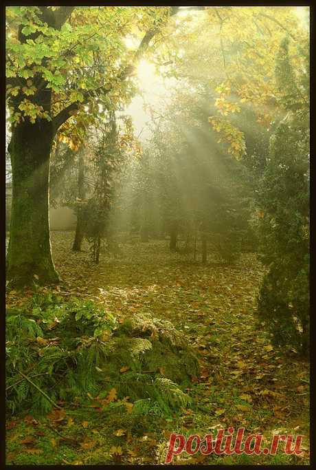 Италия, город Мира, утром в парке.