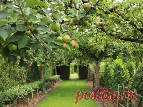 Фруктовый сад в частном доме (70 фото) » НА ДАЧЕ ФОТО
