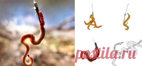 Наилучшие способы насадить на крючок червя: как увеличить поклевки | Рыбалка-БЛОГ | Яндекс Дзен