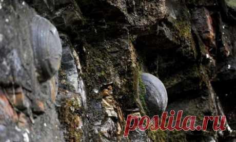Феномен Ганденг: Таинственная гора в Китае откладывает каменные яйца, которые приносят удачу