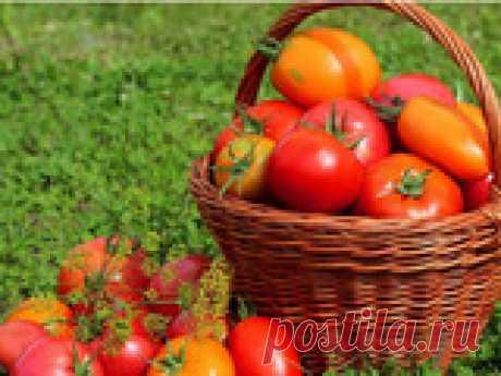 Топ лучших сладких томатов Многие огородники предпочитают выращивать сладкие помидоры. Предлагаю обзор 6 лучших сортов.