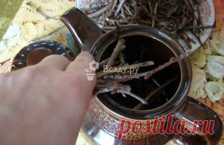 Полезный чай из веточек деревьев и кустарников Целебный чай из веточек плодовых деревьев и кустарников, которые растут в саду. Готовим чай из веточек малины, смородины, шиповника, вишни, облепихи