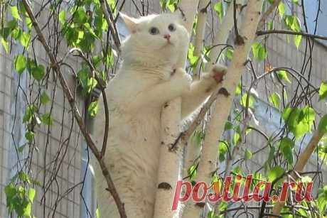 Как снять кота с дерева — лайфхак от диспетчеров службы спасения. Берете флакон валерьянки и выливаете на ствол дерева на высоте вытянутой руки. ВСЁ.