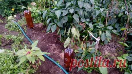 Не ожидала, что простые бутылки так облегчат работу в огороде — 5 полезных применений | 6 соток