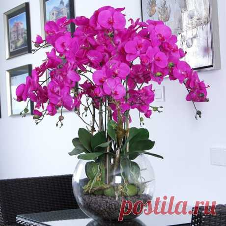 Чеснок как спасение для орхидей — Полезные советы