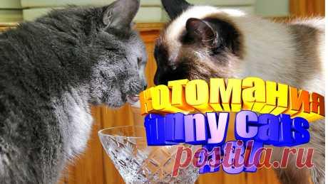 видео смешные коты, смешное видео коты, кот смешной видео, смешное видео котов, видео для котов, коты видео, коты воители видео, для кота видео, видео о котах, смешные животные, видео смешных животных, смешное про животных, смешное видео животных, про животных смешных, приколы коты, прикол котов, кота приколы, коты и приколы, смешное видео кошки, кошка смешная, смешное кошки, смешные видео кошек, кошек смешных, кошка смешно, смешно про кошек, кошки и смешные, видео с кошками, кошка видео