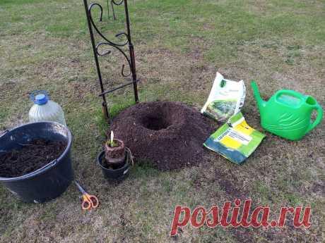 Как правильно посадить, а не похоронить клематис | 6 соток