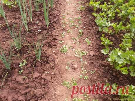 Топ-10 ошибок при выращивании овощей, которые могут стоить вам урожая Как и любое садоводство, выращивание овощей требует опыта. И хотя многие овощные культуры не слишком требовательны, все же растения иногда могут быть очень непредсказуемыми. Поэтому чтобы помочь всем начинающим садоводам, вот 10 наиболее распространенных ошибок, которых следует избегать, чтобы