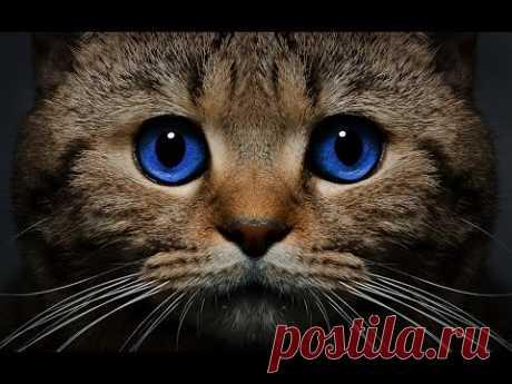 Cat breeds породы кошек - YouTube