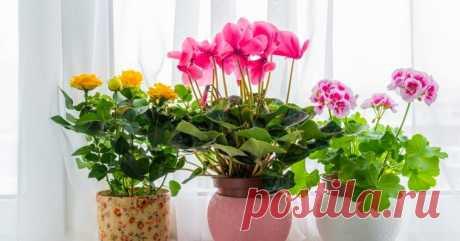 Чужой в доме: какие комнатные растения можно принимать в дар, а какие — нет Комнатные цветы — это не просто украшение. Они пропитываются энергетикой дома и часто привязываются к тому или иному жилищу. Именно поэтому стоит быть осторожнее и следовать полезным приметам.