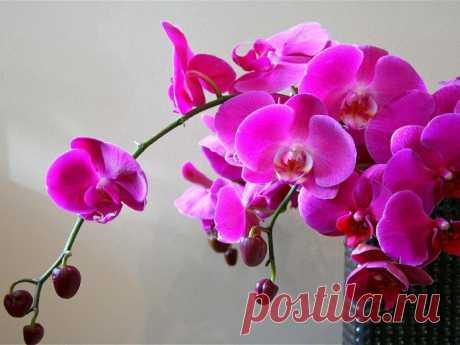 Уход за орхидеей: основные правила | Одна Минута