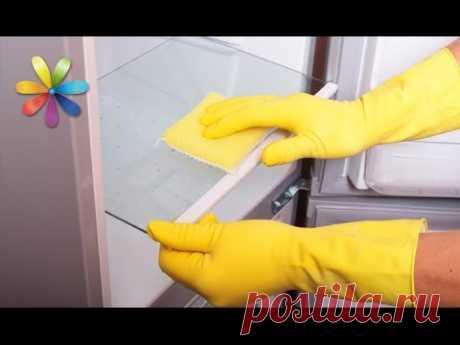 Как помыть холодильник, чтобы он вас не отравил – Все буде добре. Выпуск 768 от 03.03.16