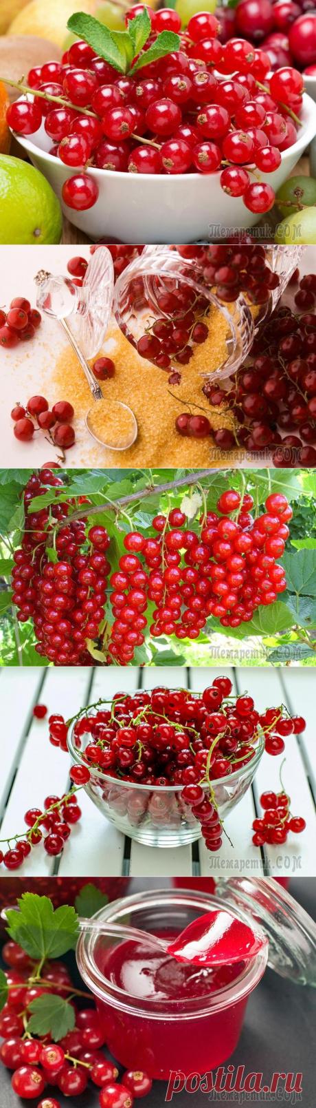 Красная смородина – польза, вред и противопоказания
