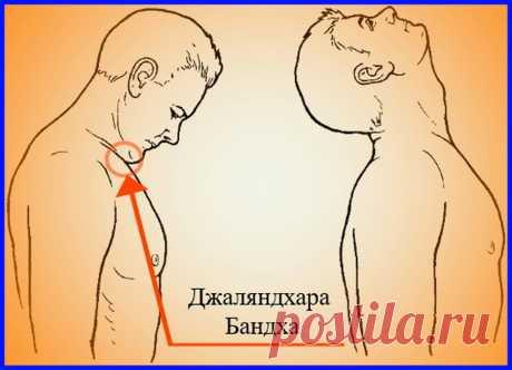 Грива Шактивардхак – Упражнения для оживления мозга. | Читающим между слов... | Яндекс Дзен