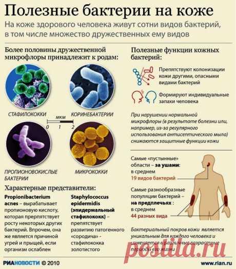 Полезные бактерии на коже