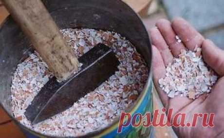 Настой яичной скорлупы для обильного урожая огурцов | Твоя усадьба | Яндекс Дзен