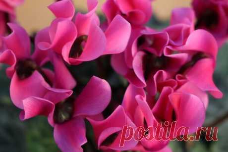 Самые опасные цветы для дома   Блоги о даче, рецептах, рыбалке