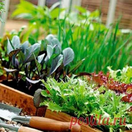 Домашняя аптечка - для огорода - МирТесен