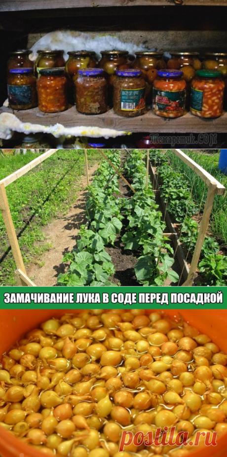 Сад и огород, дача | Liudmila Vazyulya | Фотографии и советы опытных дачников на Постиле
