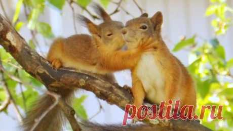 Baby squirrel giving her mother a kiss   Белка целует мать