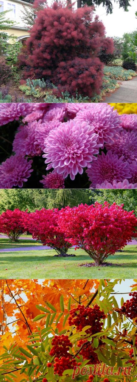 Как украсить сад осенью. Невероятно красивые растения для осеннего сада | Ландшафтный дизайн | Яндекс Дзен