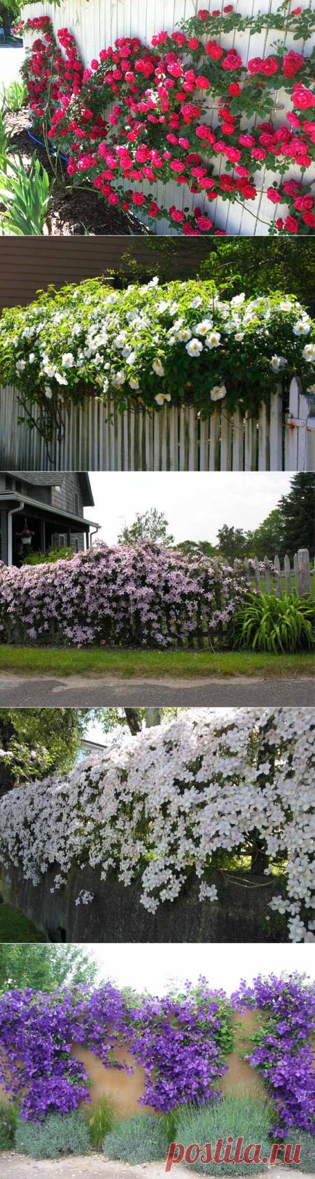 30 фото заборов: преврати свой забор в красивый цветник