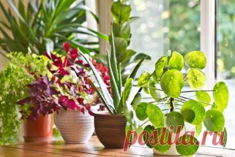 Комнатные цветы, которые должны быть в каждом доме - фото и названия.